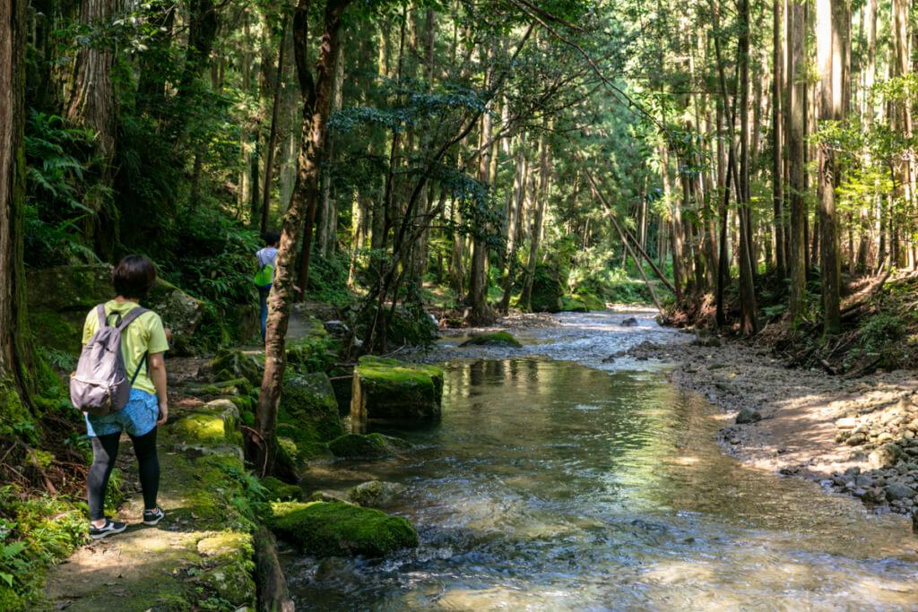 和歌山県新宮市 桑ノ木の滝 ハイキングコース10