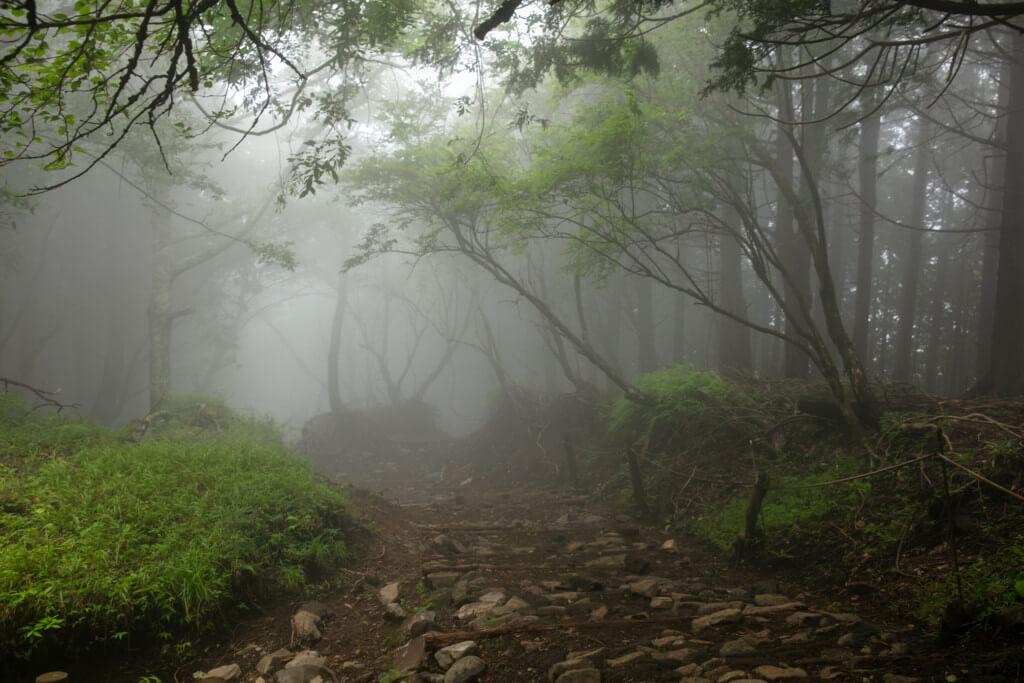 霧に包まれた大倉尾根