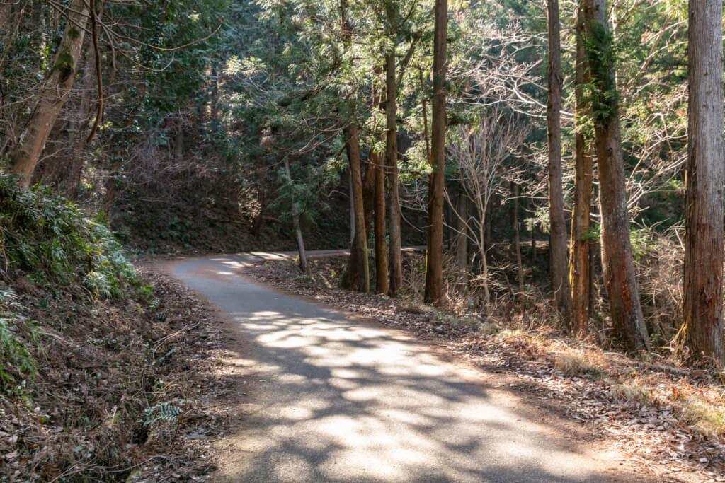 長瀞アルプスの林道