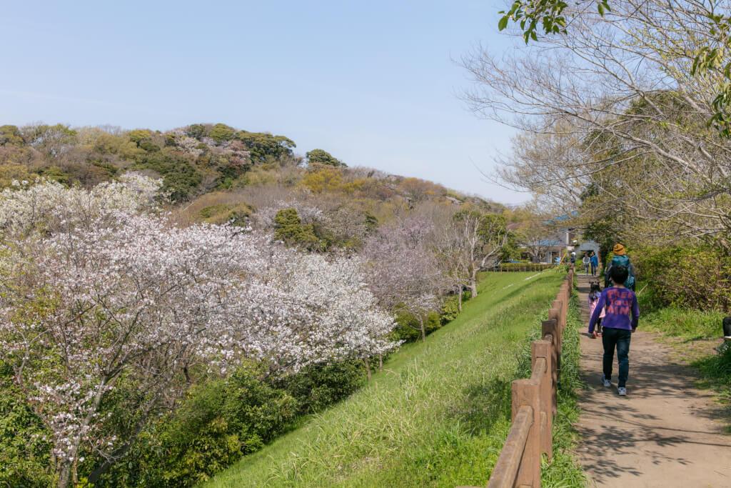 鎌倉ハイキング 衣張山 鎌倉市子ども自然ふれあいの森