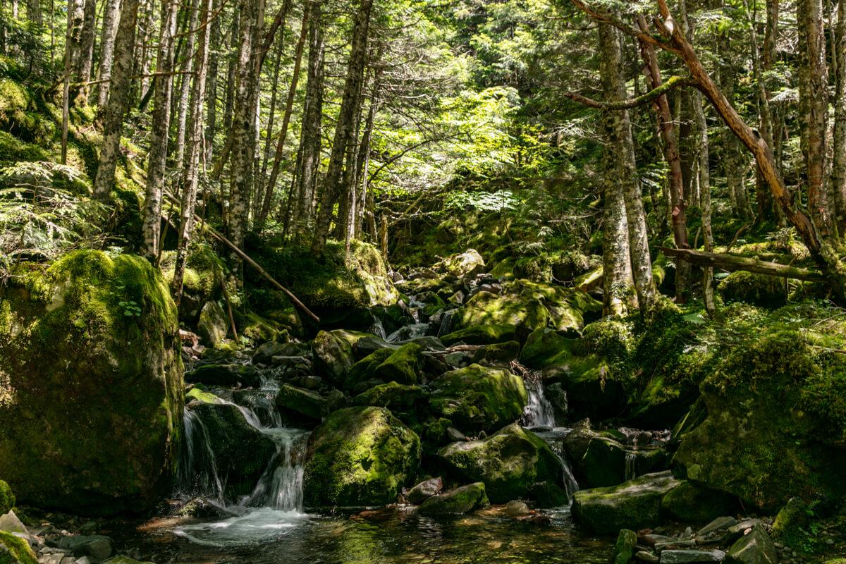 夏沢鉱泉〜オーレン小屋 幻想的な風景2