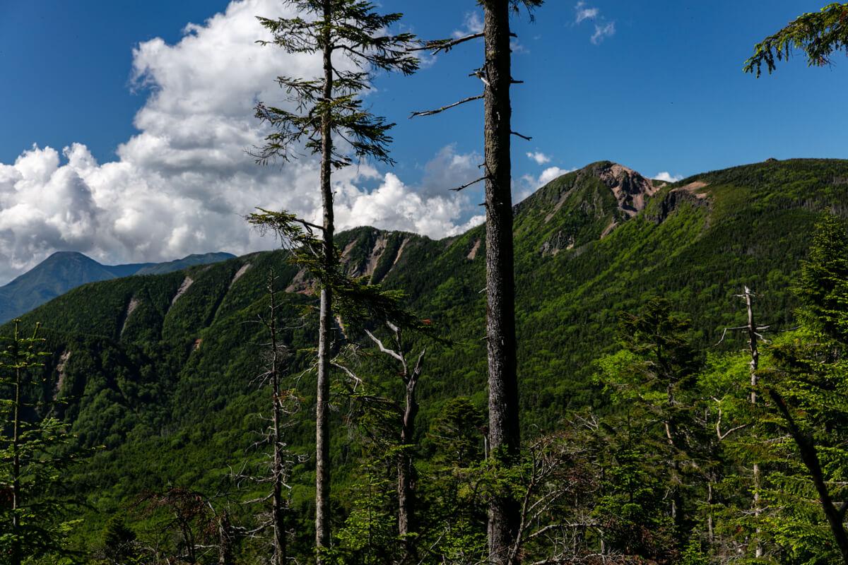 八ヶ岳 オーレン小屋〜峰の松目 登山道