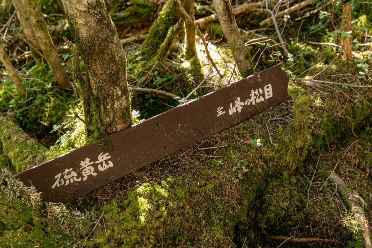 八ヶ岳 オーレン小屋〜峰の松目 道標